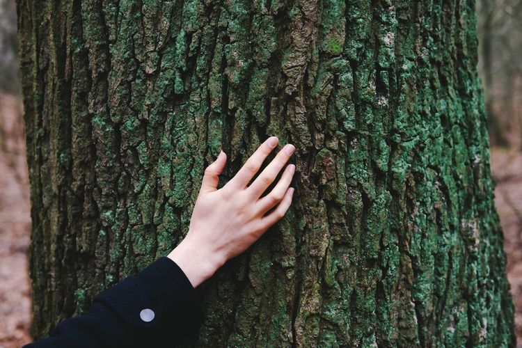 Cropped image of woman hand touching tree trunk