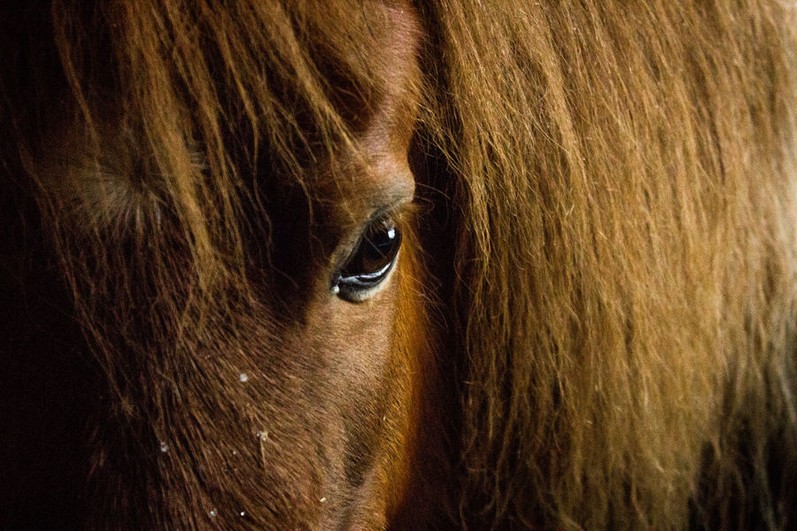 Animal Barn Bridle Close-up Copy Space Creature Day Farm Fur Horse Horse Eye Horse Riding Horses Mammal No People Winter