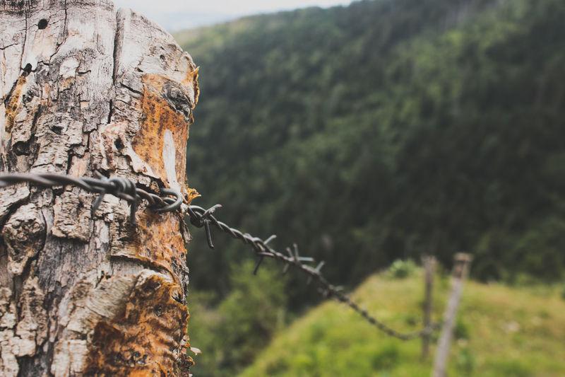 Fence Tree