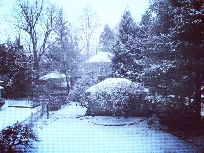 Snow Winter Cold Temperature Tree Nature Weather Outdoors No People Beauty In Nature Tranquility Tranquil Scene Day Scenics Bare Tree Snowing Sky Suburbia Suburban