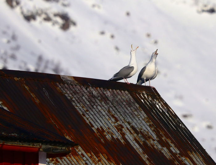 Low angle view of seagull perching on roof