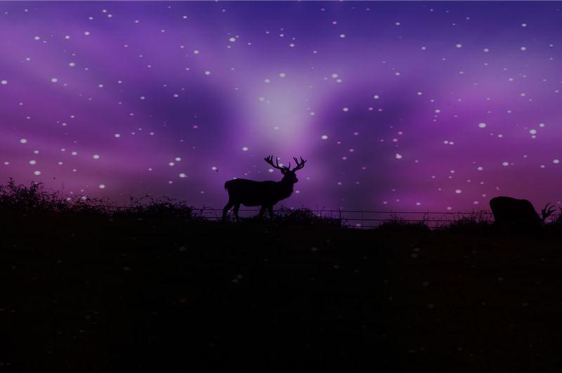 Silhouette of deer on field against sky at night