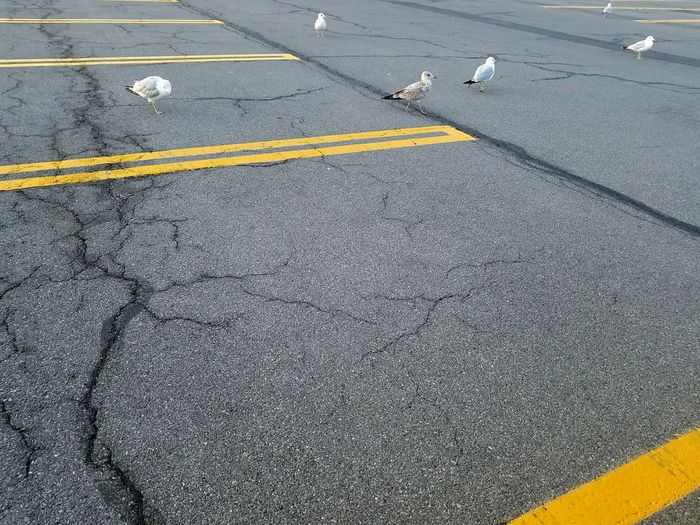 Road Yellow High Angle View Day No People Airport Samsung Galaxy S7 Check This Out Bird Bird Photography Syracuse