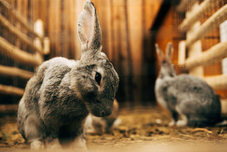 Close-up of rabbits on land