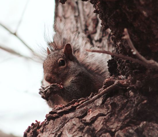 Animal Wildlife Animal Tree Animals In The Wild Nature Close-up No People Mammal Day Outdoors Branch Beauty In Nature Animal Themes Squirrel Squirrel Closeup Chipmunk Photography Tree