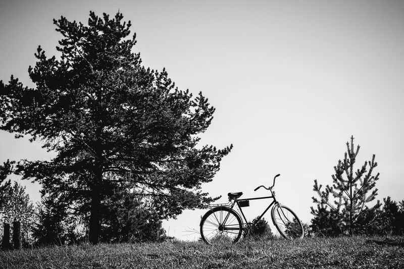 Tree Plant Field Bicycle Transportation Land Sky Land Vehicle Nature Mode Of Transportation Clear Sky Growth Day No People Grass Tranquility Outdoors Stationary Copy Space Scenics - Nature Wheel