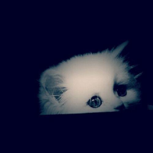 Sweetie cat wallah My_design تصميمي لايكرز فولو  فولورز متابعين عرب فوتو فولو فولورز متابعين my_design enjoy smile لايكات ابداعاتي taken_by_me enjoy smile