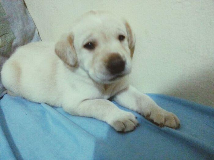 Dog Zeus Mybaby N ♡.♡