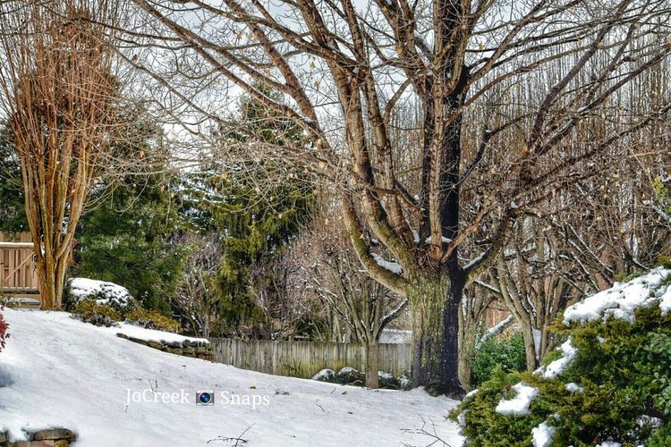Happy Treegasmic Tuesday Ladyphotographerofthemonth Nature_collection For My Friends That Connect I Love Snow Streamzoofamily Nikon D3300 Eye4photography  Tadaa Community