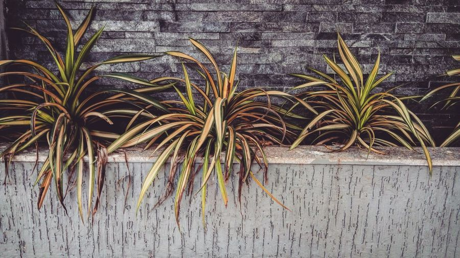 Plants Growing Outdoors