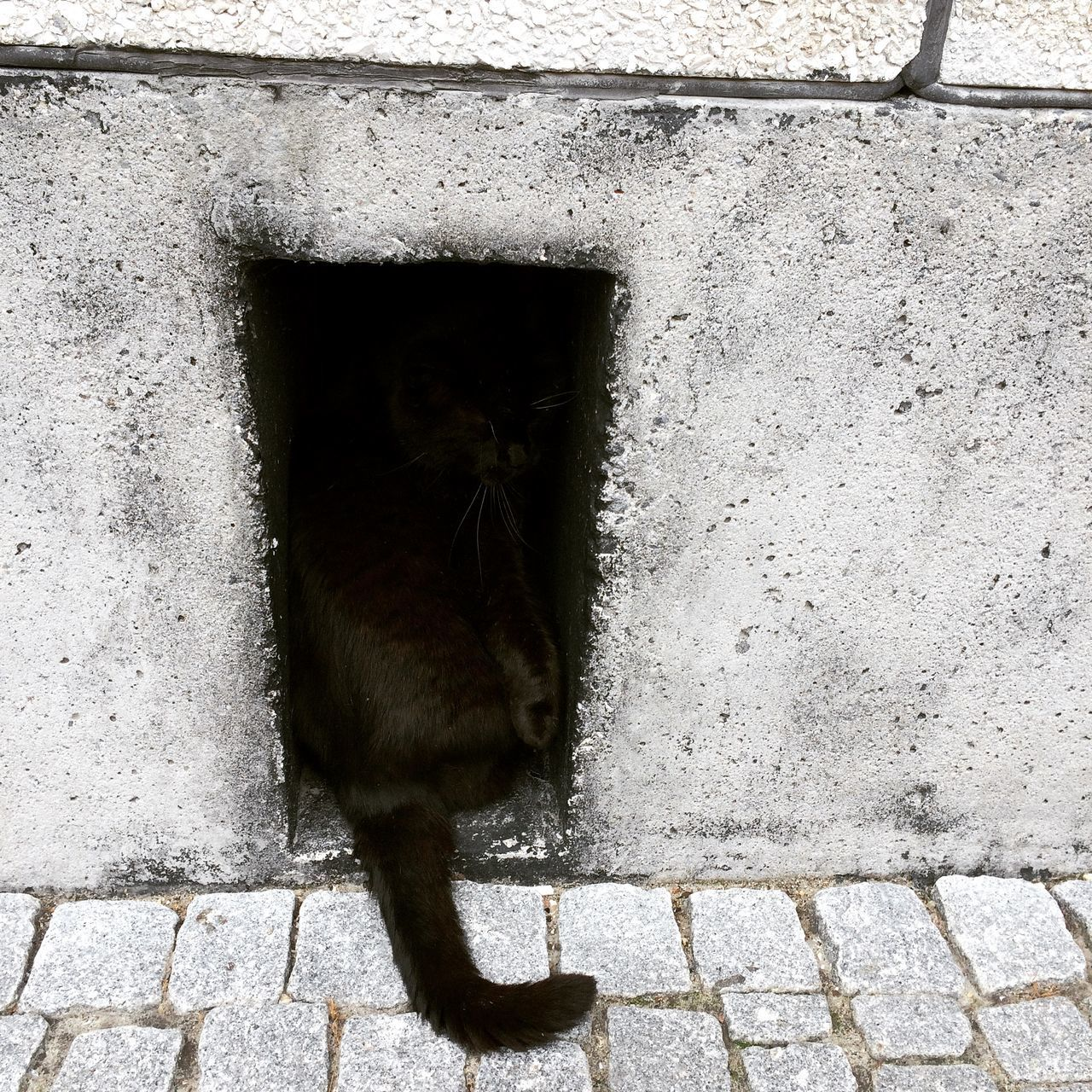 Rear View Of A Cat On The Wall