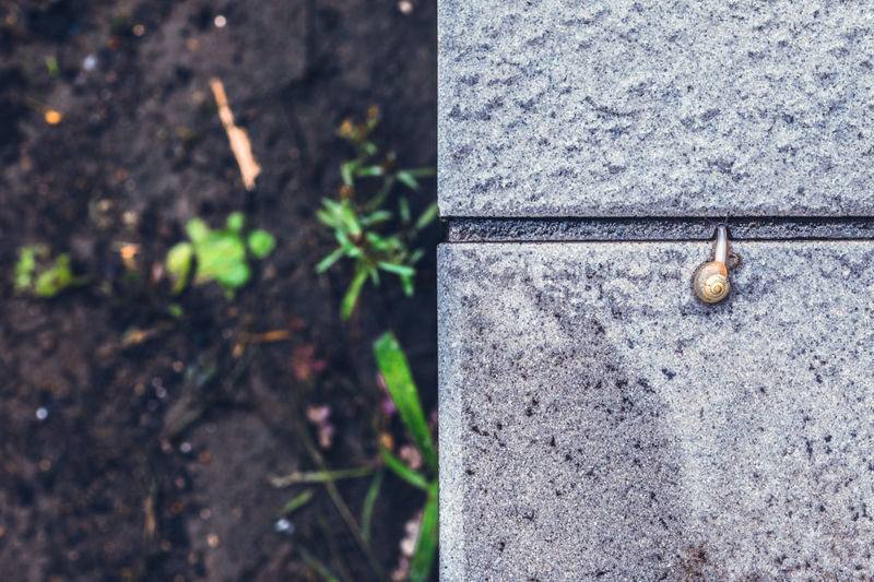 Snail Borderline World Human Vs Nature EyeEm Gallery Morning Nature On Your Doorstep Getting Inspired Enjoying The View Depth Of Field