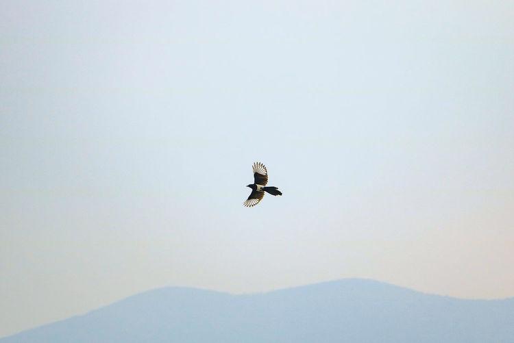 飞鸟 Bird Flying