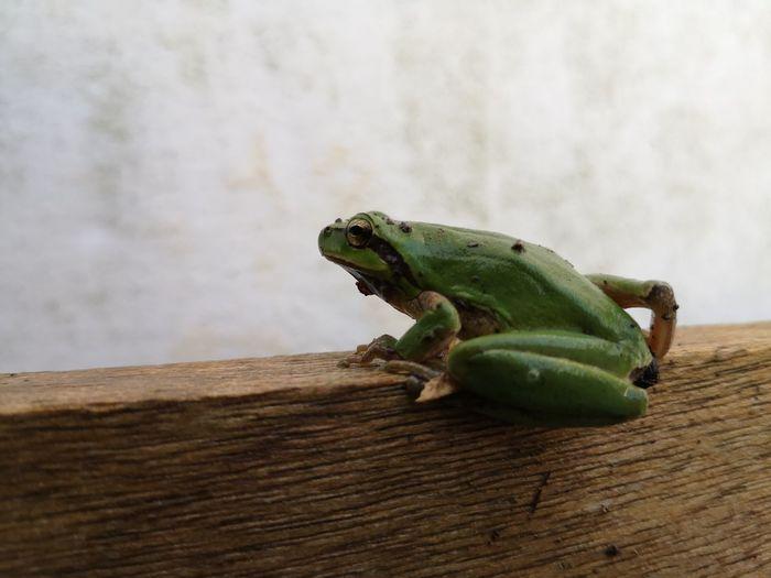 Frog Social