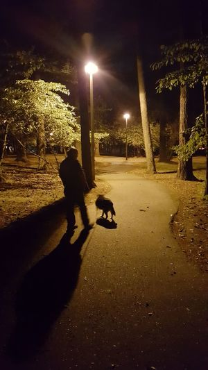 A man walking his dog in the park at night. Trees, winding path, amber lights. Walking Around Enjoying Life Urban Nightsky