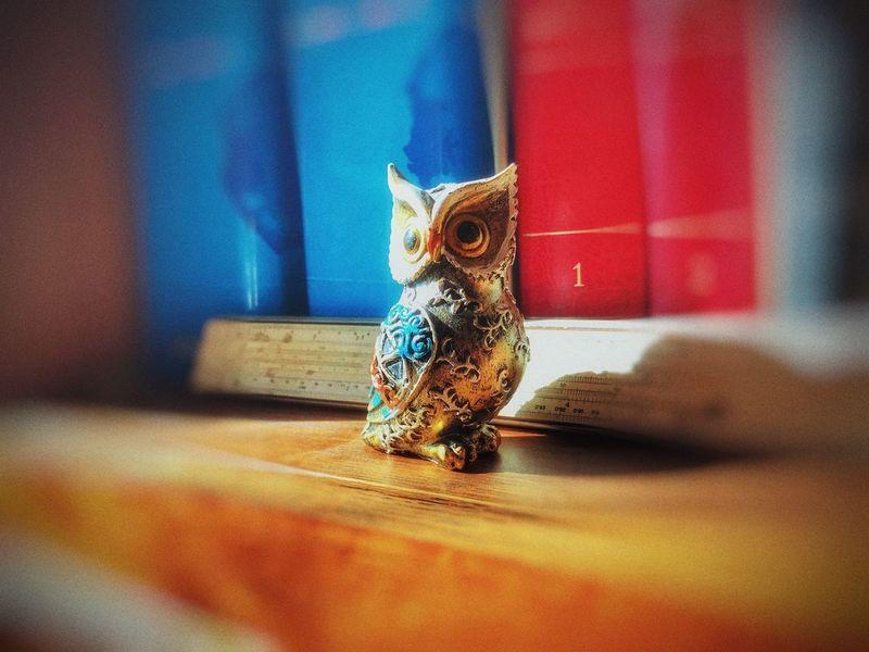 Owl One Animal Vertebrate Indoors  Animal Wildlife Bird Close-up Art And Craft
