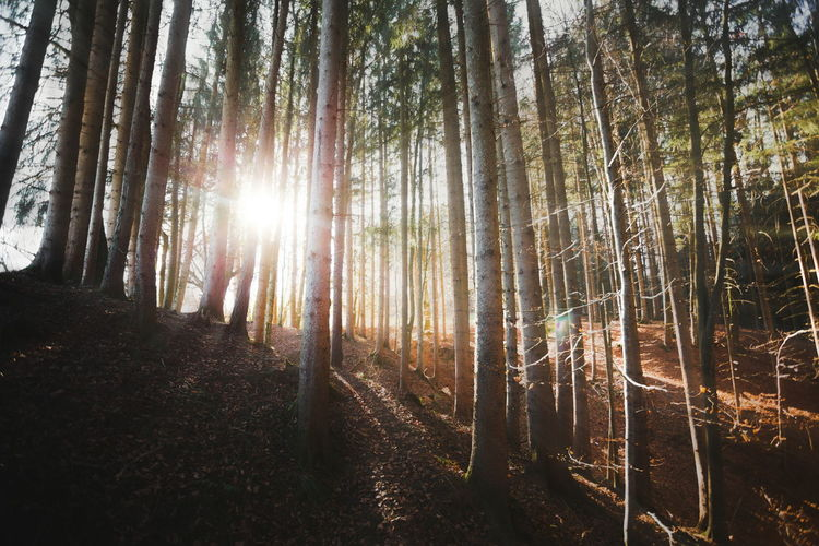 Sun Sunrays Forest Trees Nature December Canon Landscape