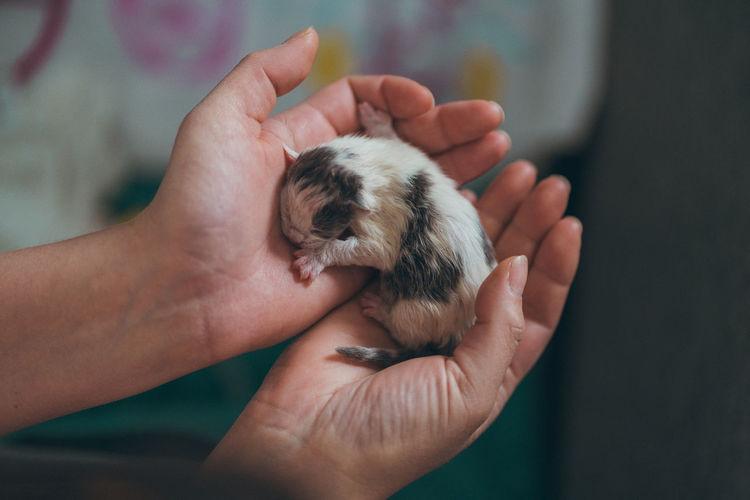 Newborn kitten in male hands