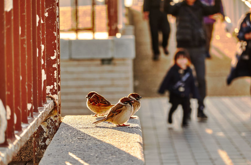 Selective Focus Focus On Foreground Child Parents Standing Blurred Background Sunlight Shadows & Lights Real People Leisure Activity Animal Bird Animal Themes Vertebrate Day Incidental People Group Of Animals Domestic Animals Architecture Animal Wildlife Outdoors Pets Domestic Animals In The Wild Walking Mammal Footpath The Art Of Street Photography