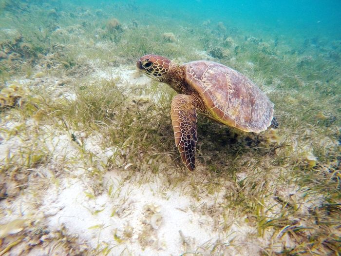 Animal Wildlife Animals In The Wild Animal Animal Themes One Animal Invertebrate Sea Life Nature Sea Marine Day Underwater No People Water Insect UnderSea Swimming High Angle View My Best Photo
