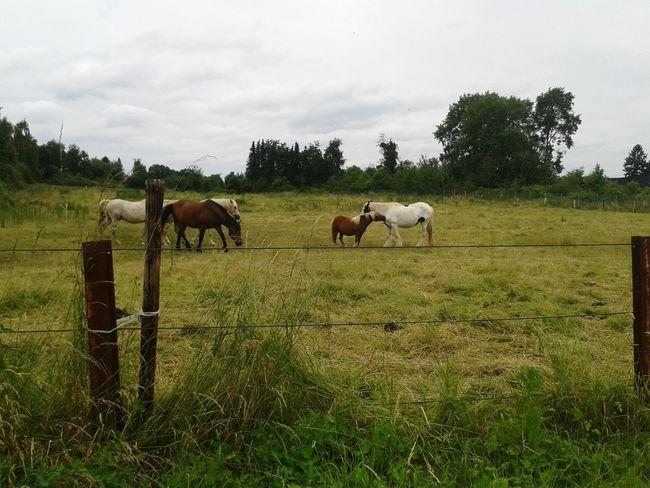 Die Pferde bei uns um die Ecke , genießen das Zusammensein. ♡ Pferdekoppel Pferde Horses Deutschland Taking Photos Unterwegsunddraußen Spazieren Und Fotografieren
