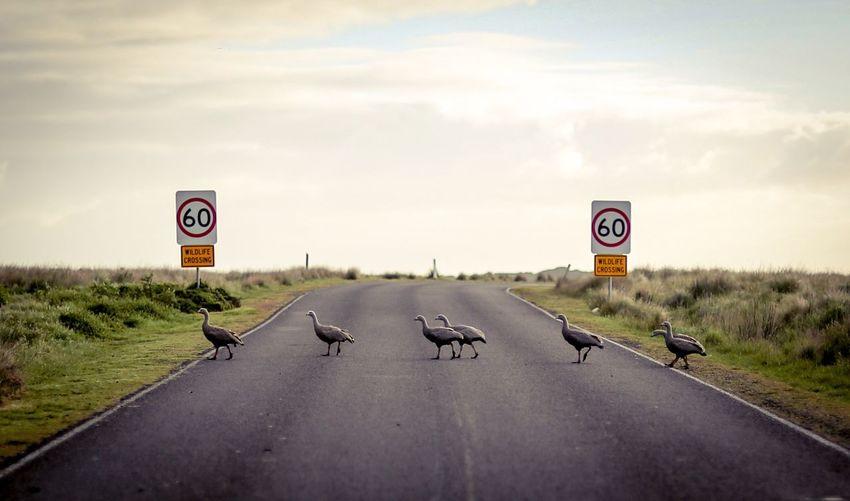 Birds crossing road against sky