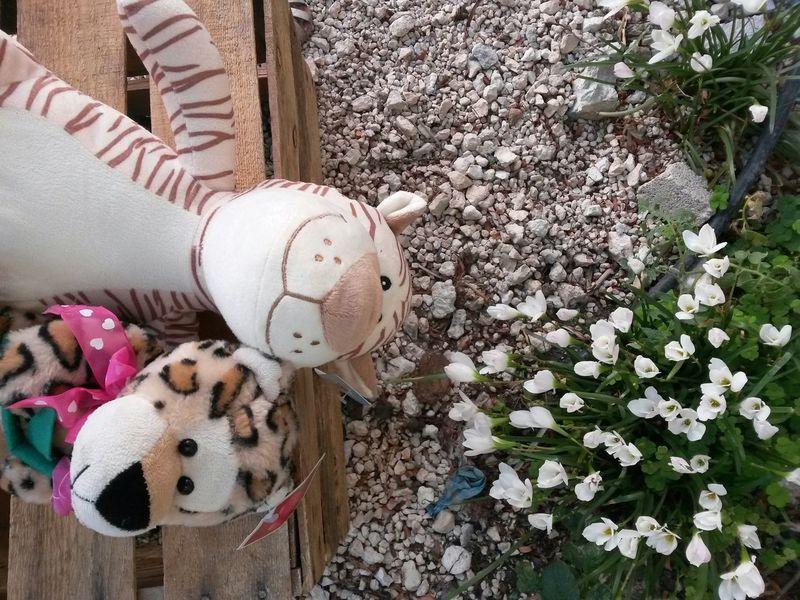 Tigris Y Éufrates ♥ EyeEm Best Shots Funny Teddy ♥ Flowers Tiger JAGUAR ♥ Feline ♥ Mexico