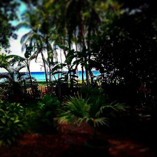 Il nostro giardino per un giorno! Ciao stronzi Playahermosa Puravida Costarica