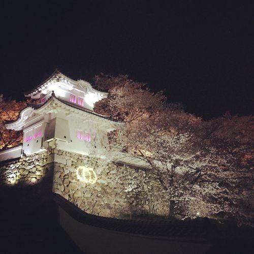 龍野城桜満開!