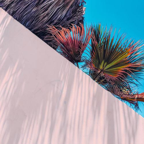 Palm shadows minimal location