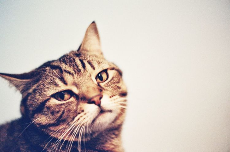 Korea Portrait Close-up Filmisnotdead Film Photography Cat One Animal Animal Themes Pets Domestic Animals