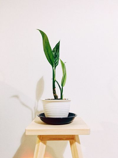 Leaf Plant Part Plant Nature Growth No People Indoors  Beauty In Nature Houseplant Potted Plant Fragility Table Vase Shadow Vulnerability  Green Color Wall - Building Feature Decoration Small