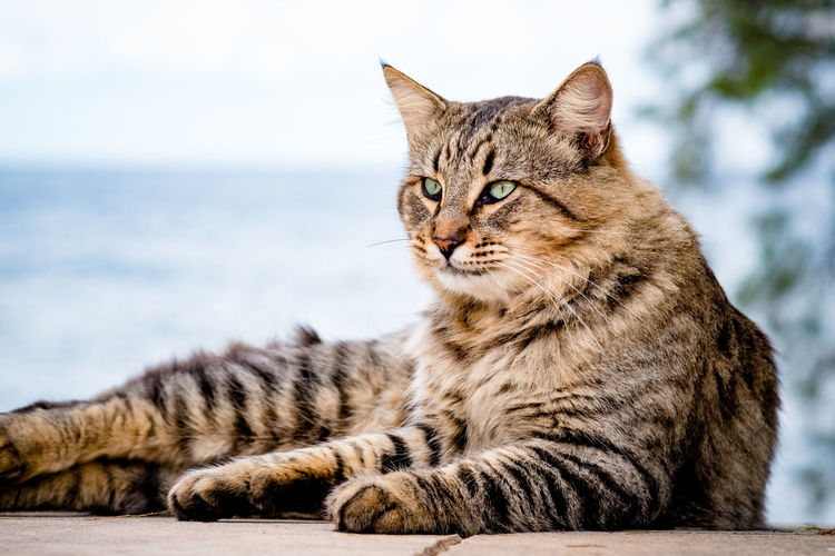 Close-up of a cat looking away on footpath
