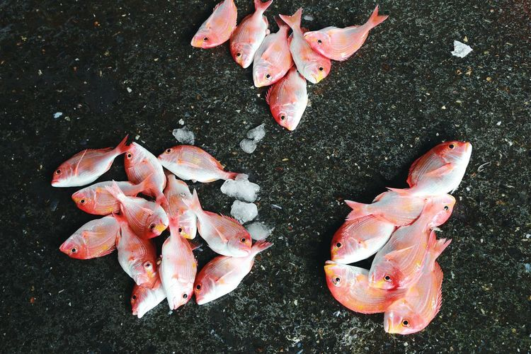 High angle view of fish at market for sale