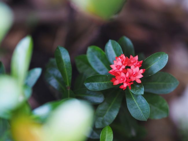 Leaf Flower Beauty In Nature Freshness Growth Close-up Nature Fragility Petal Plant Green Color Focus On Foreground No People Flower Head Day Outdoors Flowers Flower Collection Flower Spike Flower Red Redhead Red Color