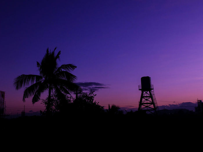 sun rise Tree