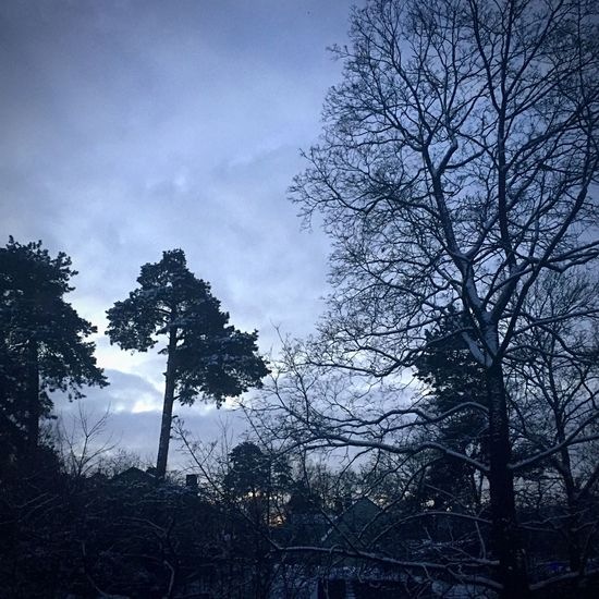 Winter Morning View From The Window... Tree Silhouette Nature Tranquility Low Angle View