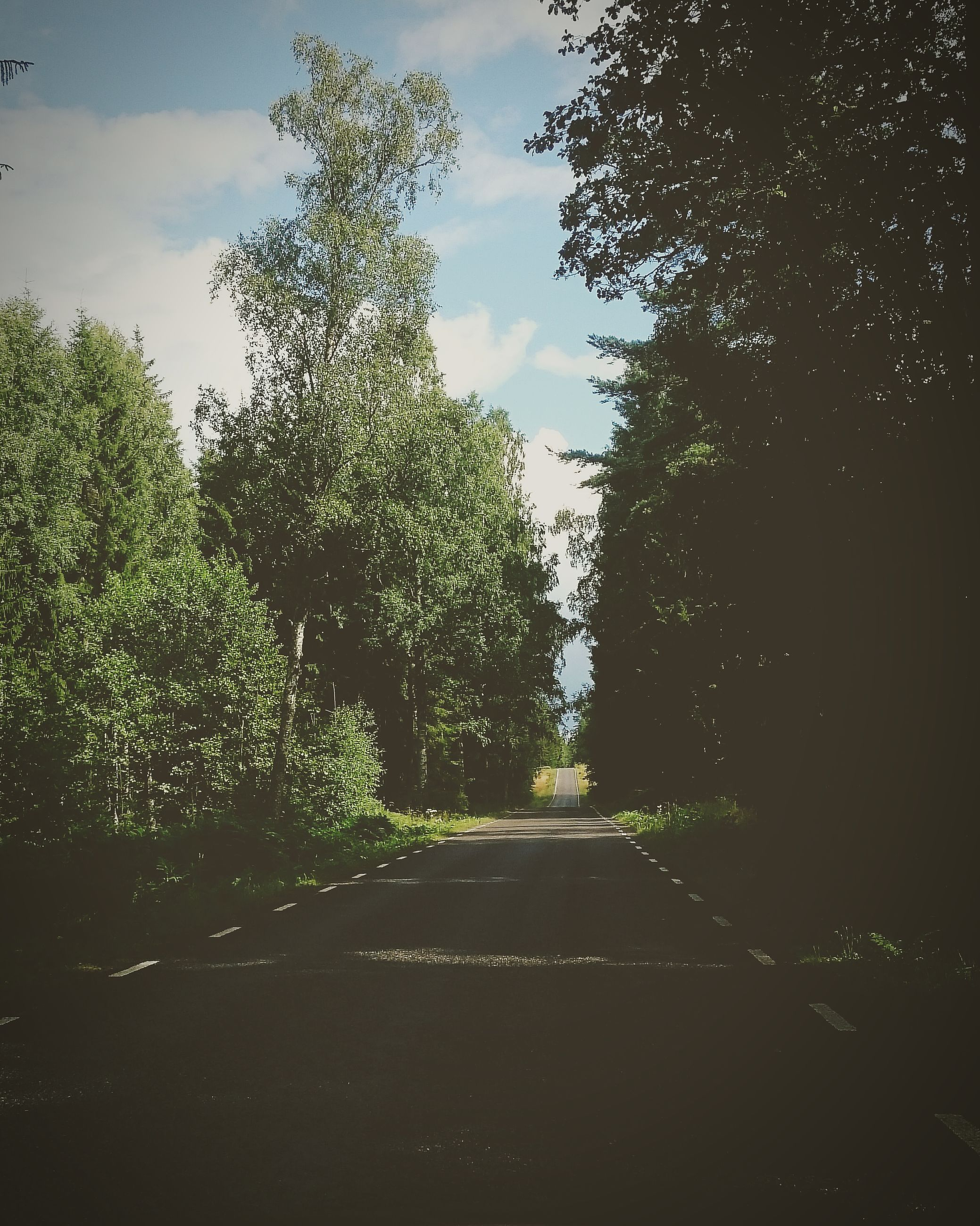 tree, road, the way forward, diminishing perspective, transportation, no people, day, outdoors, nature, sky, scenics, growth, landscape, beauty in nature
