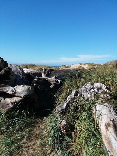 Driftwood on the shore at Driftwood Shores Clear Sky Mountain Blue Sky Landscape Grass