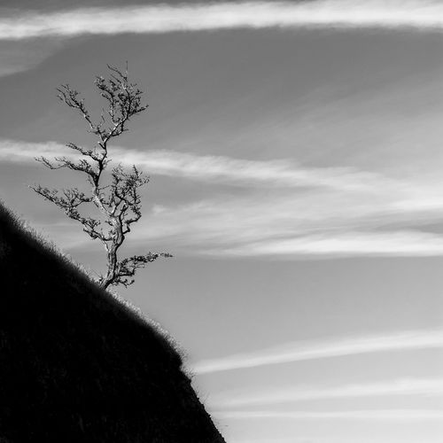 Lone tree on a rocky outcrop in Aberystwyth, Wales, UK Sky Plant Cloud - Sky Beauty In Nature Tree Tranquility Low Angle View Nature Tranquil Scene No People Day Scenics - Nature Bare Tree Growth Branch Outdoors Single Tree Non-urban Scene Idyllic Tree Trunk Isolated Wales Blackandwhite Tree