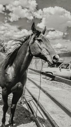 Ranch Horses Horse Domestic Animals One Animal Animal Themes No People Day Outdoors Sky Barn Lifestyle Ranch Cattle Ranch Working Animal Pony Agriculture Livestock Cowboy Country Amarillo, TX Western Equine Corral Mane Pasture Stable The Week On EyeEm Visual Creativity