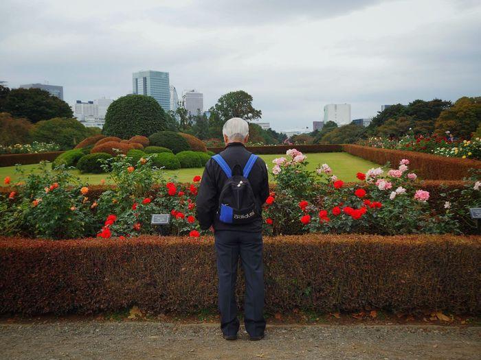 Life with roses/大切な時間 Roses Autumn Rose Flowers Enjoying Life Olympus Om-d E-m10 Shinjuku Gyoen National Garden Walking Around