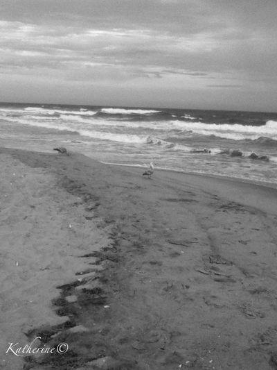 Taking A Walk At The Beach