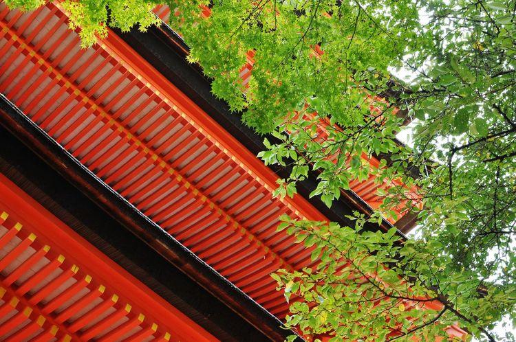 Lookingup Summer Views Historical Building EyeEm Nature Lover Summer2015 Japan