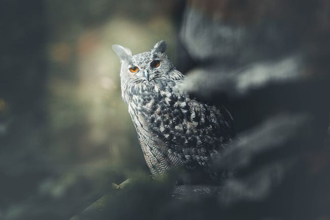 Photoart Photography Owl One Animal Animal Themes Animals In The Wild Day Focus On Foreground No People Outdoors Nature Portrait Pets EyeEmNewHere EyeEm Ready