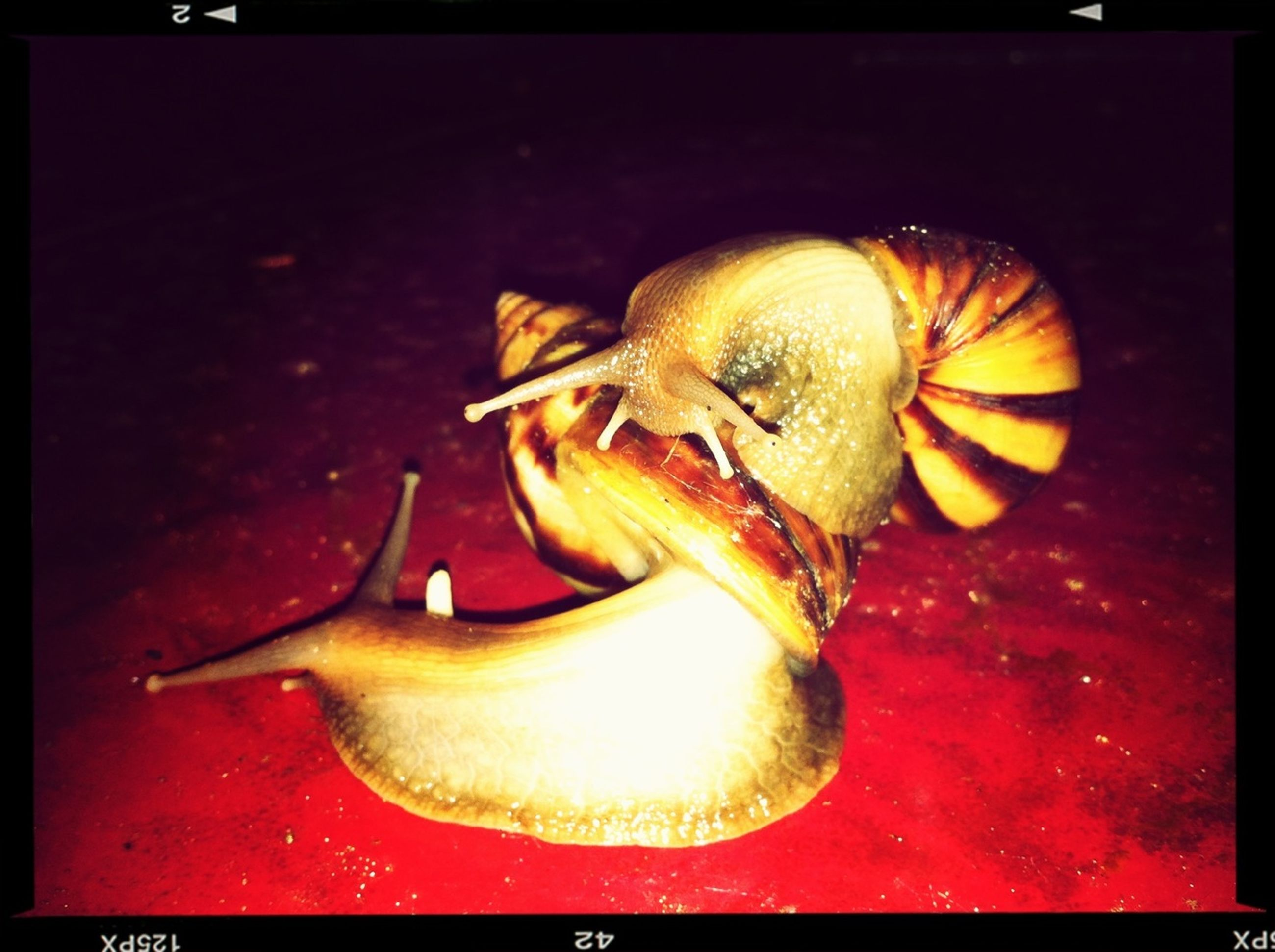 animal themes, one animal, animals in the wild, wildlife, close-up, snail, food and drink, indoors, fish, transfer print, auto post production filter, animal antenna, high angle view, food, zoology, no people, seafood, animal shell, animal body part, insect