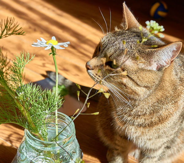 Close-up of cat by potted plant
