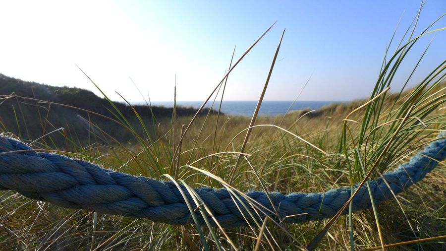 Sea And Sky Oceanside Beach Blue Sky Sea Dunes Seaside Beach Life Handmade Blue Sky Close-up Grass Calm Scenics Idyllic Horizon Over Water Ocean Reed - Grass Family