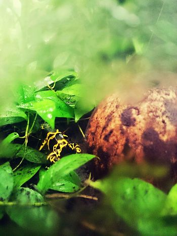 Green Color Animals In The Wild Nature Animal Themes Leaf Plant Close-up Beauty In Nature Fragility Frog Dartfrog Steam EyeEmNewHere The Photojournalist - 2017 EyeEm Awards The Street Photographer - 2017 EyeEm Awards Neighborhood Map The Great Outdoors - 2017 EyeEm Awards