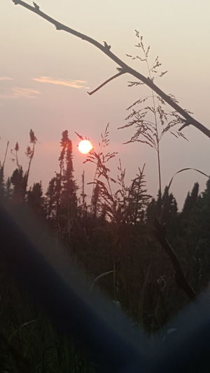 Sunset Beauty In Nature Redsunset Redsun Outdoors Red Myhomealaska Viewfrommybackyard Alaska Is Where I'm At Tranquility Sky Neon Life